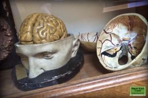 IMHM brain model
