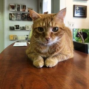 Kelmscott Bookstore Cat of Awesomeness