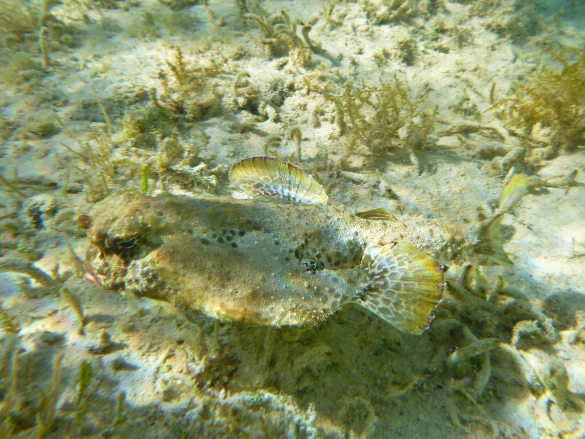 photo An Ambivalent Fish