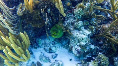 Cayman2019-0238