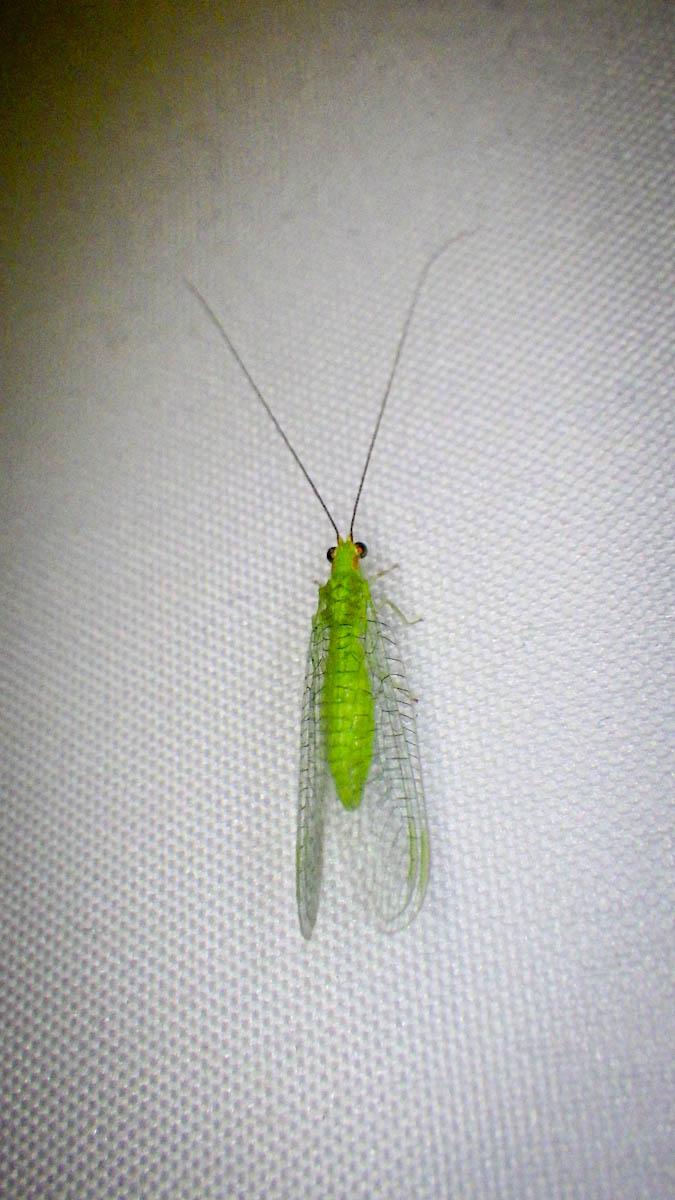 Cayman2019-0256