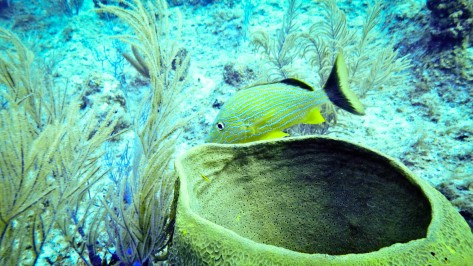 Cayman2019-0534
