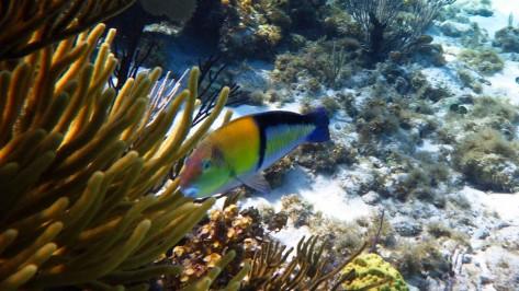 Cayman2019-0672