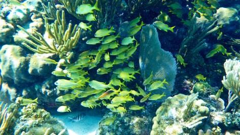 Cayman2019-0690