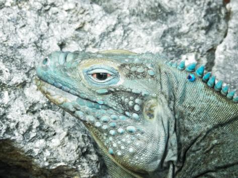 Cayman2019-0794