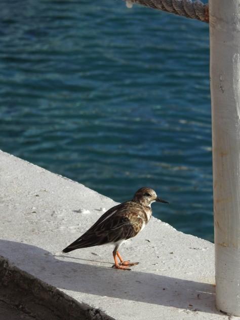 Cayman2019-0821