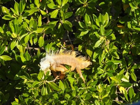 Cayman2019-0869