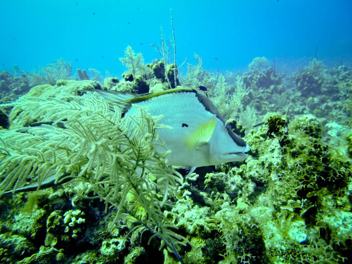 Cayman2019-1010466