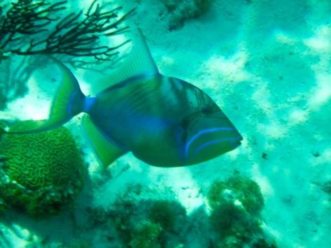 Cayman2019-1010784